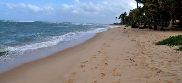 Beach with yellow sand and wood
