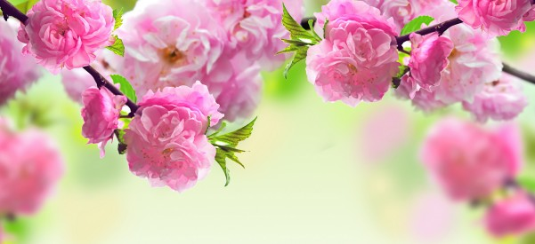 spring-flowers-background