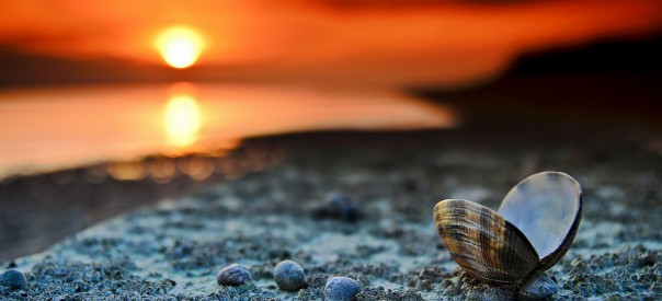 Beach-Shells-Mussels-Sunset